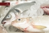il-dongione-pesce-3